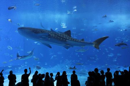 沖縄県ちゅら海水族館